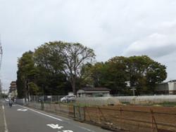 Adachi_iriya8
