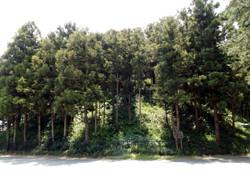 Higashi_shogun3