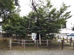 Shiki_shokatsu18