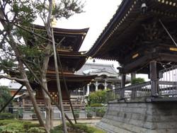 Warabi_sangaku79