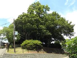 Akibayama51