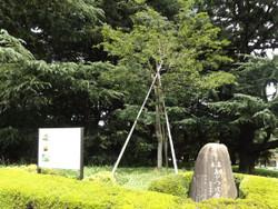 Seitoku31