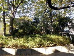 Shibuya_sarugaku1