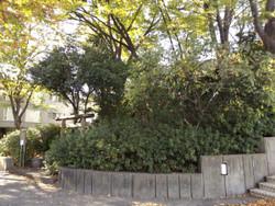 Shibuya_sarugaku3