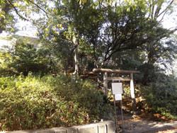 Shibuya_sarugaku7