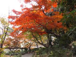 Shinagawa_goten4