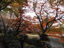 Shinagawa_goten6