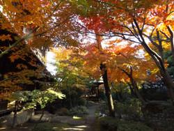 Sendagi_yasuda23