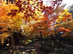 Sendagi_yasuda26