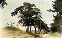 Kuragano01c