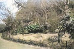 Minatoku_shiba82c