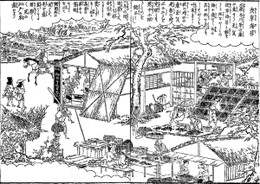 Asakusanori61