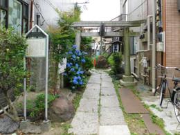 Arakawa_miminashi5