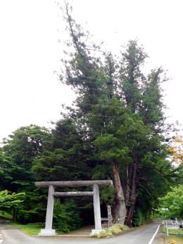 Hagihiyoshi1