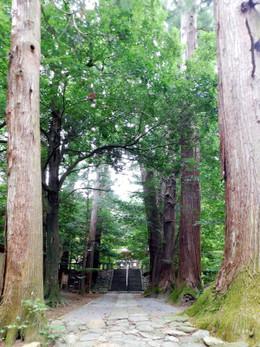 Hagihiyoshi2