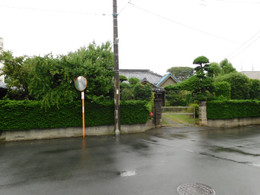 Kawaguchi_mori1