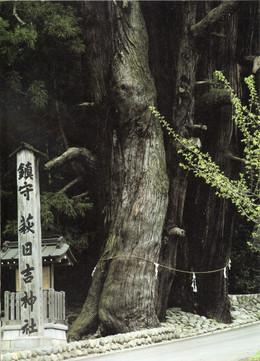 Hagihiyoshi71
