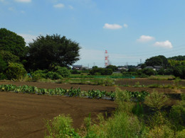 Bushyu_mejiro3