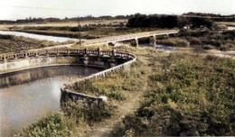 Shibayama_1955c