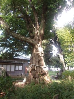 Hatogaya_jizoin6