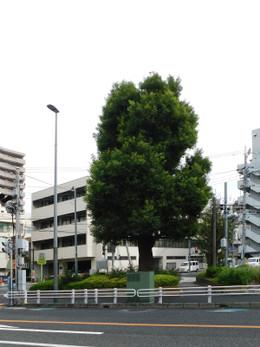 Urawa_ishibashi3
