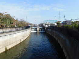 Biwatamei11