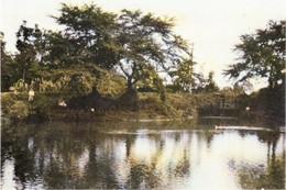 Biwatamei_1935c