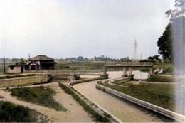 Biwatameike_1962c