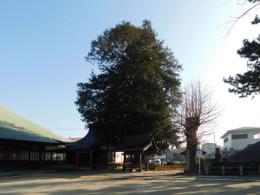 Kawaguchi_jiseiin8