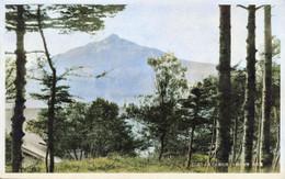 Rebun187c