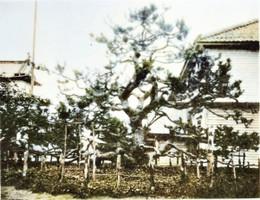 Matsumae291c