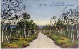 Teshikaga321