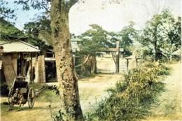Wakamiya785c